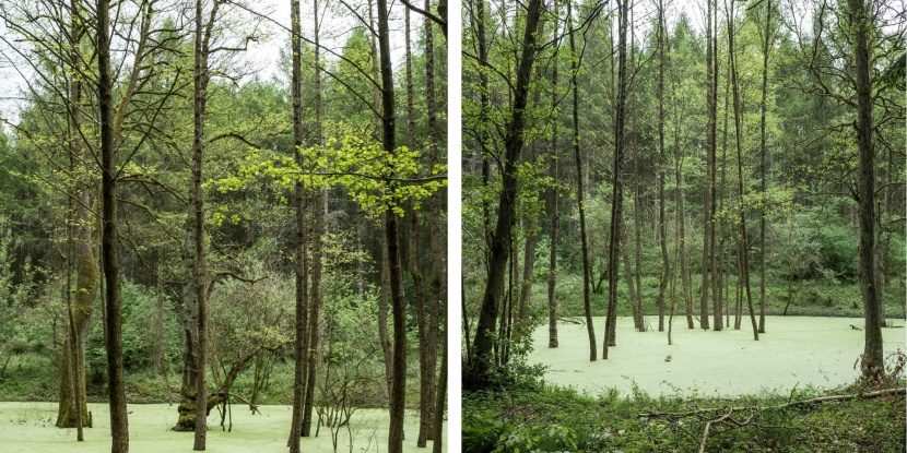 Blog Wald Natur Fotografie Gestaltung